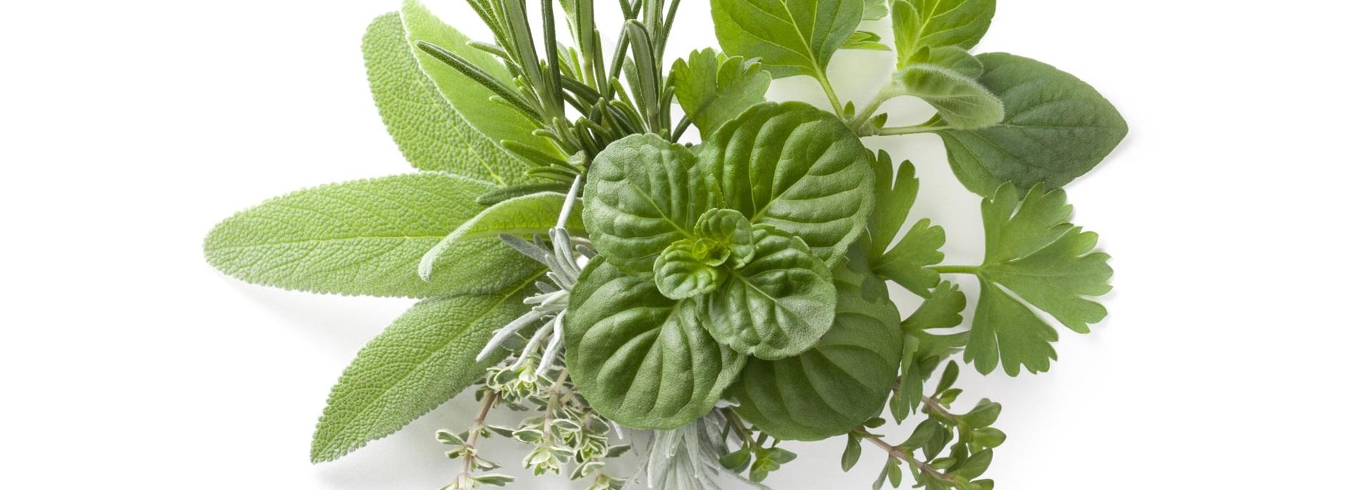 Botanic Medicine