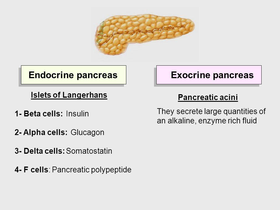 Two Part Pancreas Dr Xandria Williams Phd M Dic Arcs Mrsc